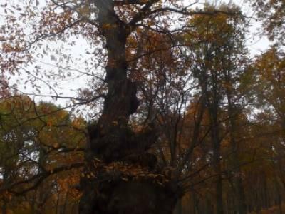El Castañar de El Tiemblo, viaje noviembre; escapadas sierra de madrid